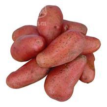 红薯 预售
