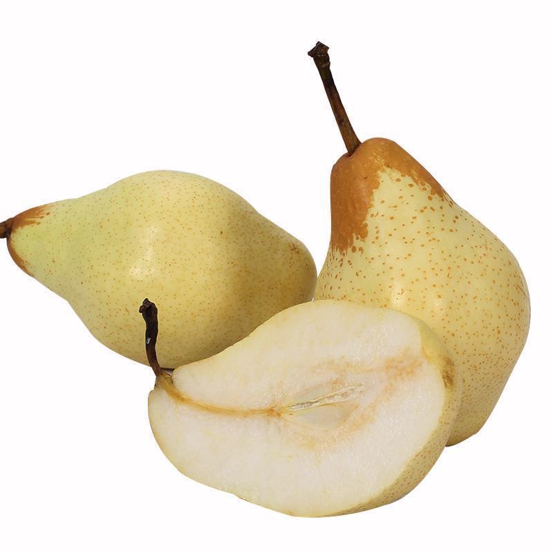 烟台梨(精品)