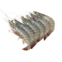 白虾小41-50