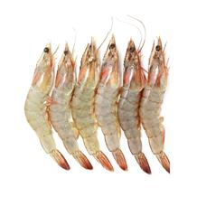 白虾大60-70 500g装