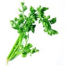 芹菜(精品)
