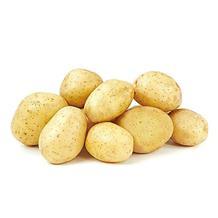 荷兰土豆(精品)
