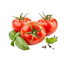 西红柿(精品)